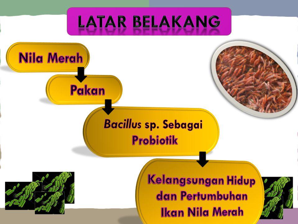 LataR belakang Nila Merah Pakan Bacillus sp. Sebagai Probiotik