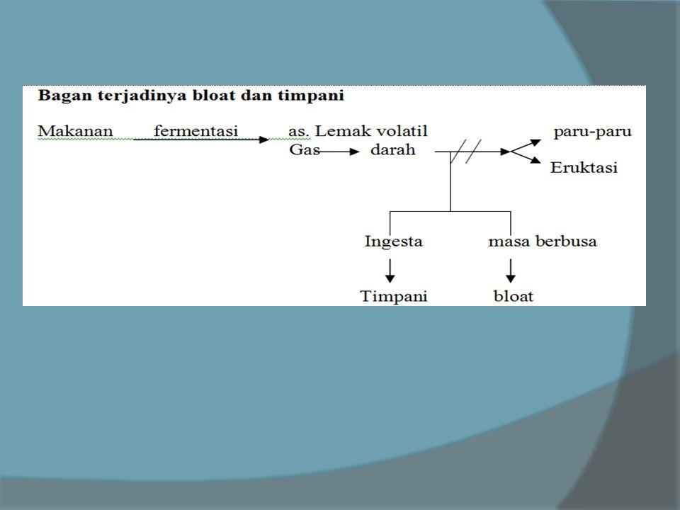 terapi : timpani & bloat Kolik