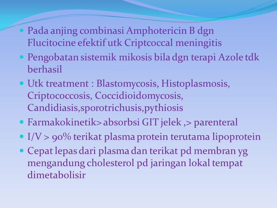 Pada anjing combinasi Amphotericin B dgn Flucitocine efektif utk Criptcoccal meningitis