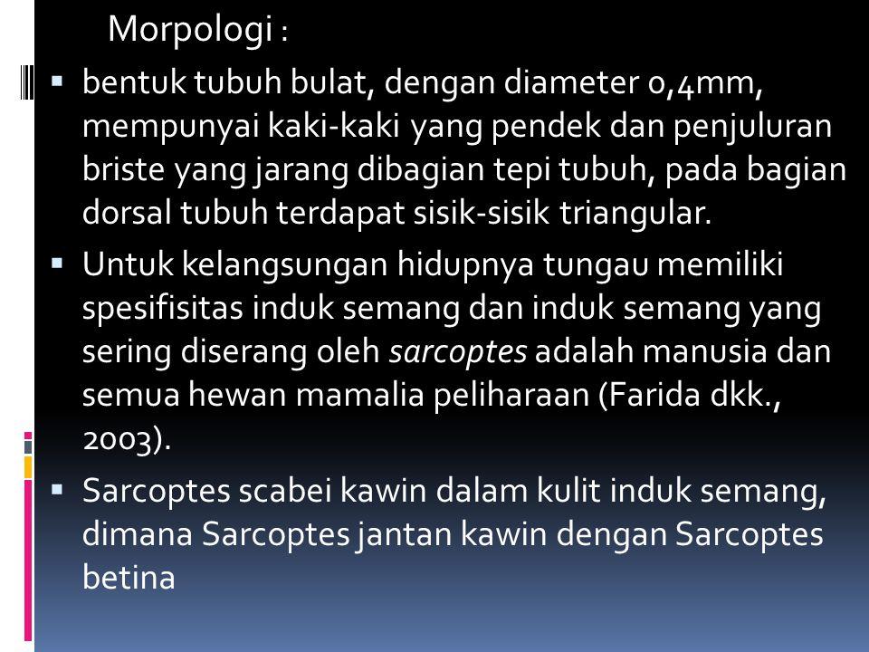Morpologi :
