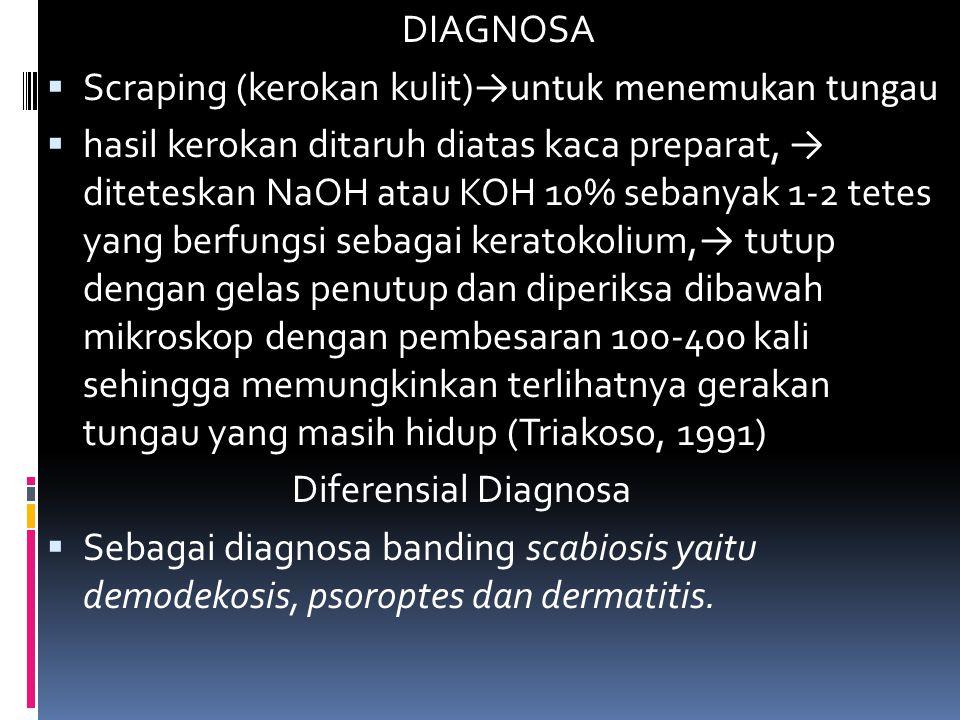 DIAGNOSA Scraping (kerokan kulit)→untuk menemukan tungau.