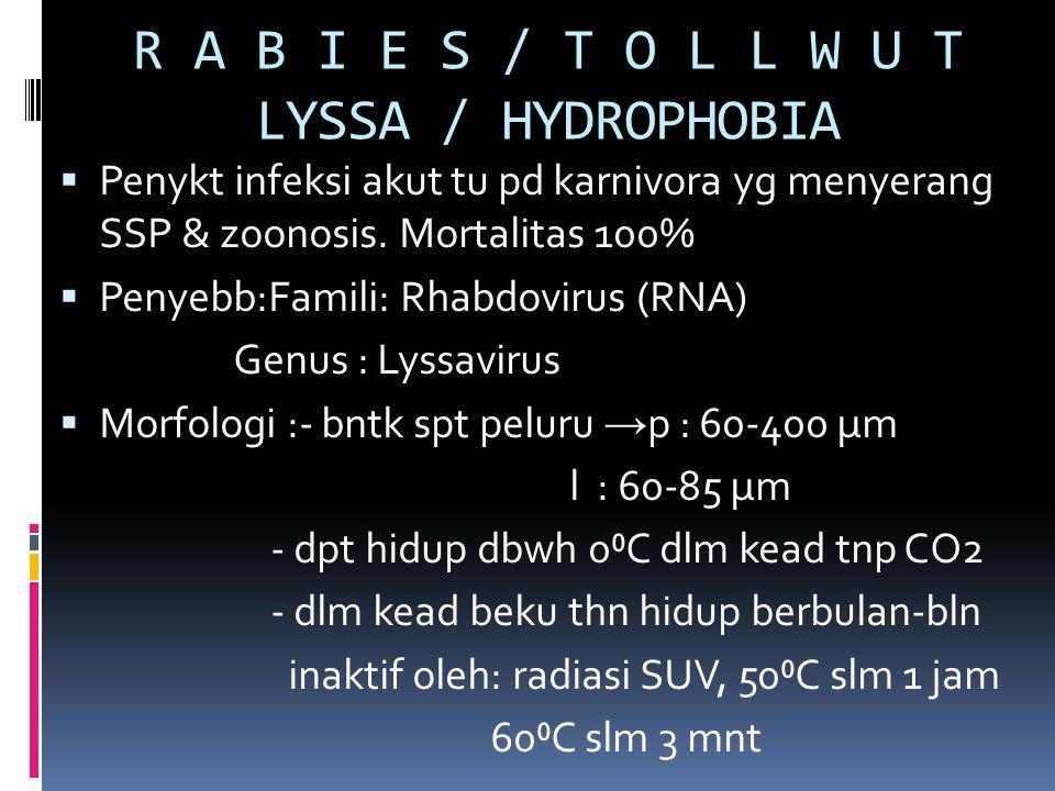 R A B I E S / T O L L W U T LYSSA / HYDROPHOBIA