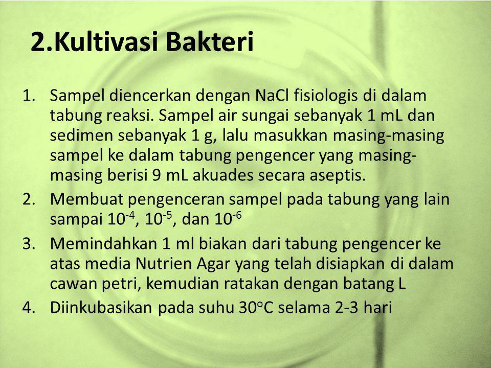 2.Kultivasi Bakteri