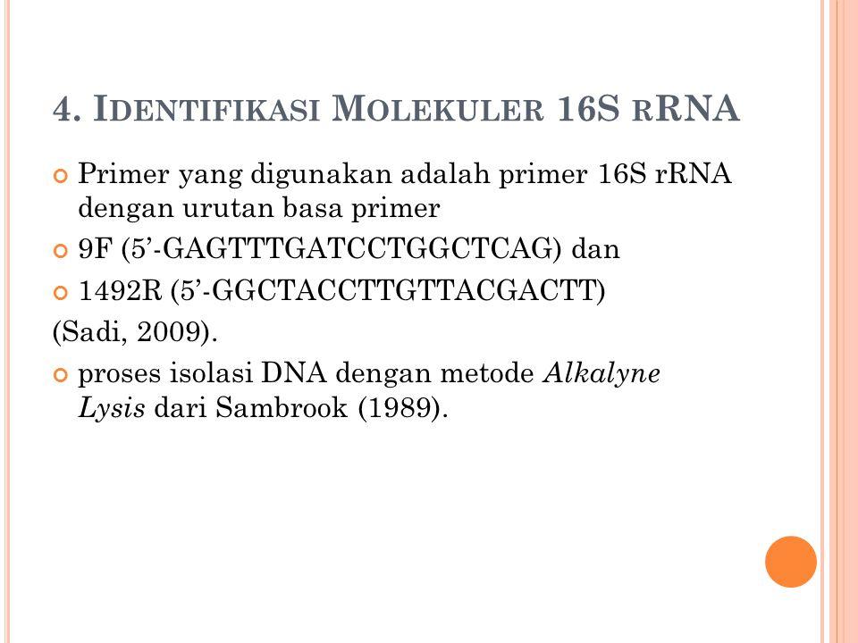 4. Identifikasi Molekuler 16S rRNA