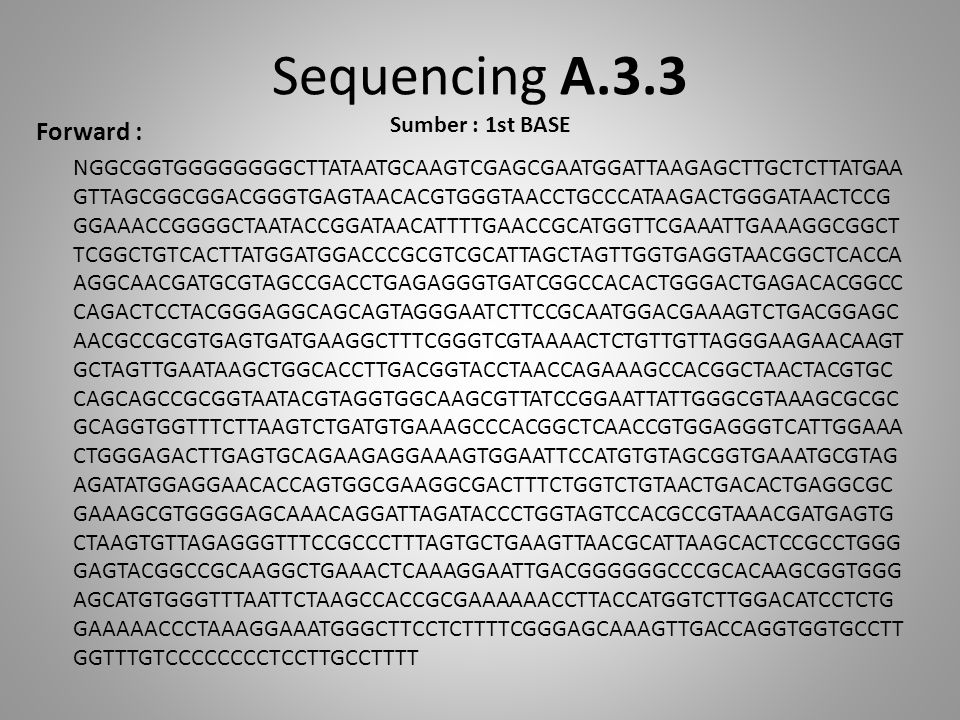 Sequencing A.3.3 Sumber : 1st BASE