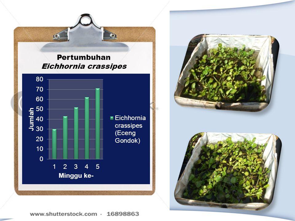 Pertumbuhan Eichhornia crassipes