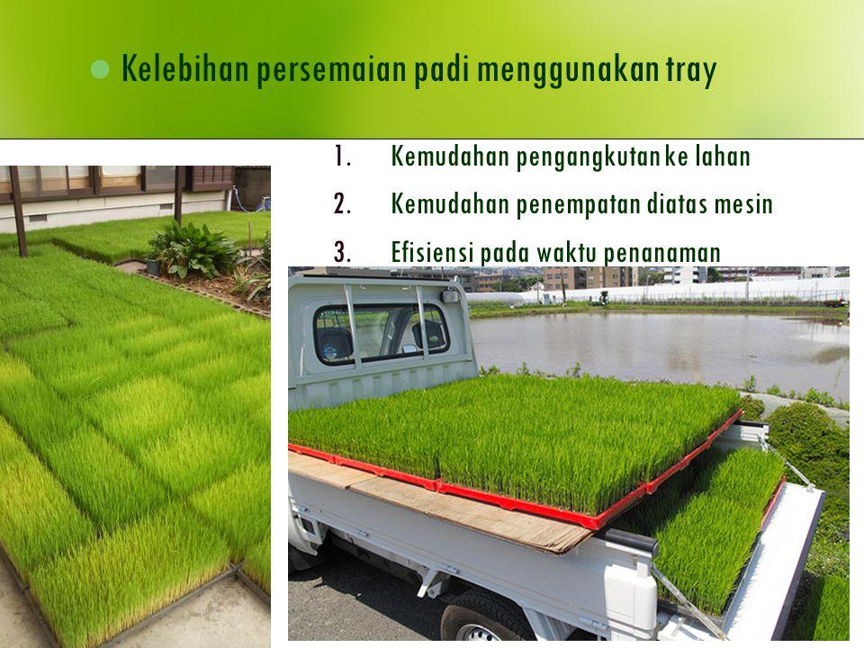 Kelebihan persemaian padi menggunakan tray