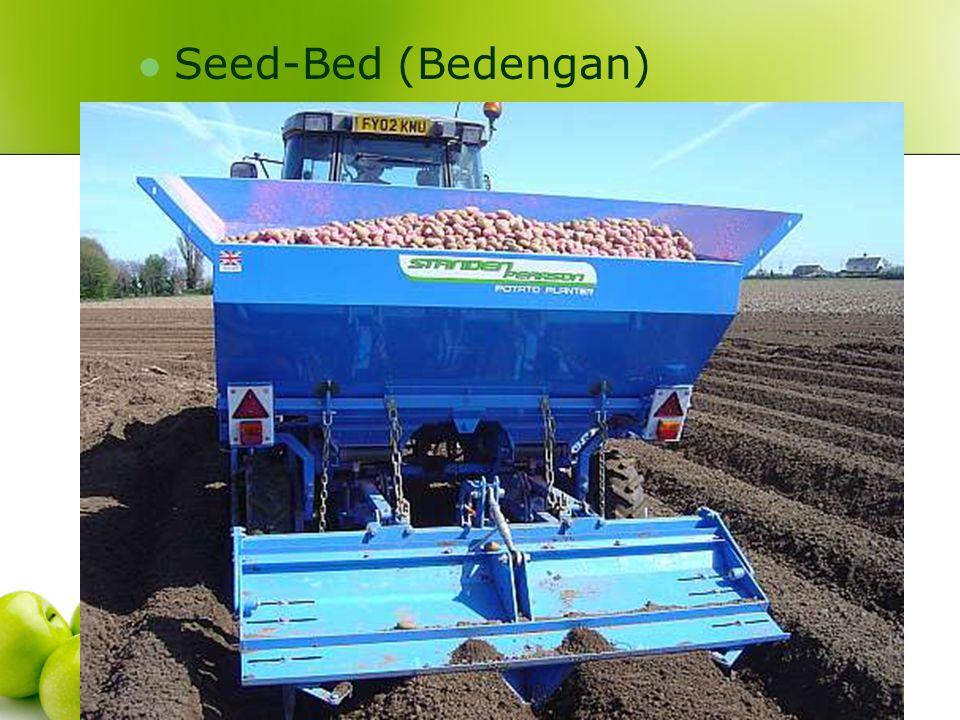 Seed-Bed (Bedengan)