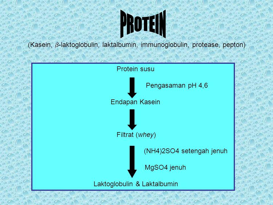 PROTEIN (Kasein, b-laktoglobulin, laktalbumin, immunoglobulin, protease, pepton) Protein susu. Pengasaman pH 4,6.