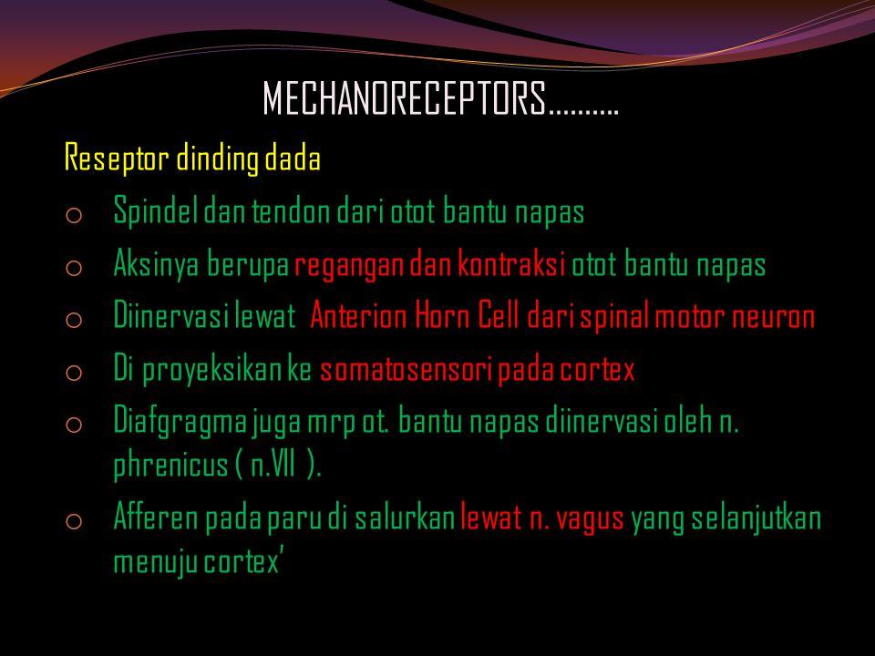MECHANORECEPTORS………. Reseptor dinding dada