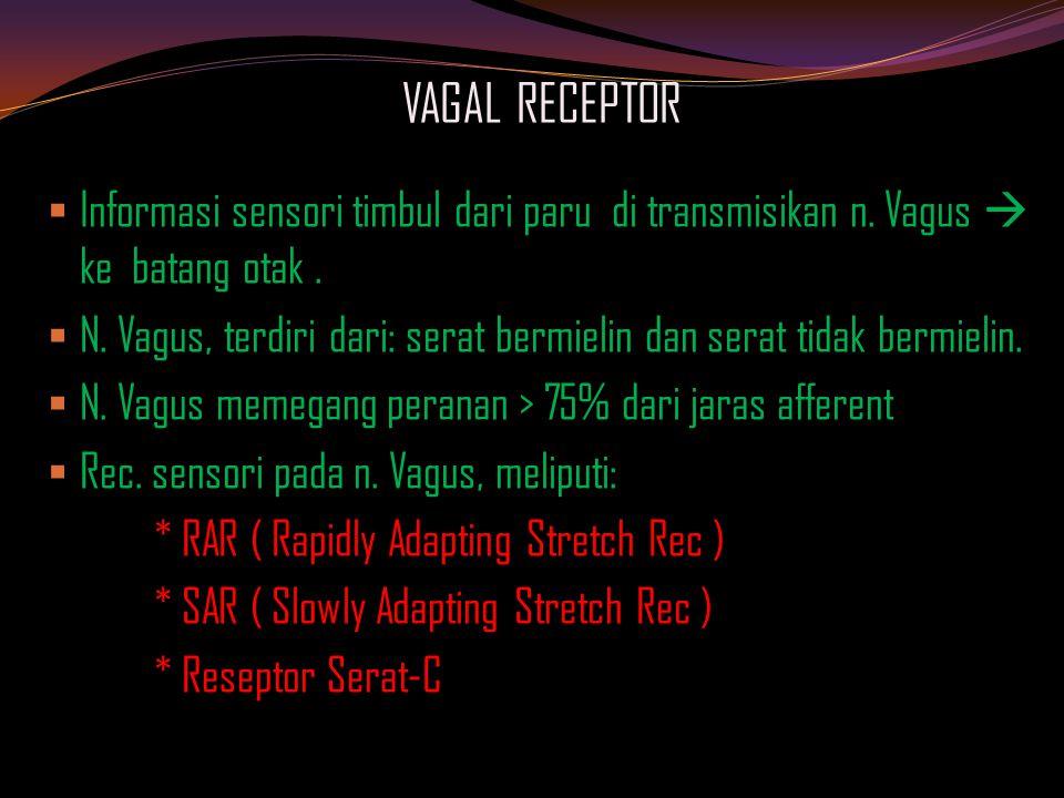 VAGAL RECEPTOR Informasi sensori timbul dari paru di transmisikan n. Vagus  ke batang otak .