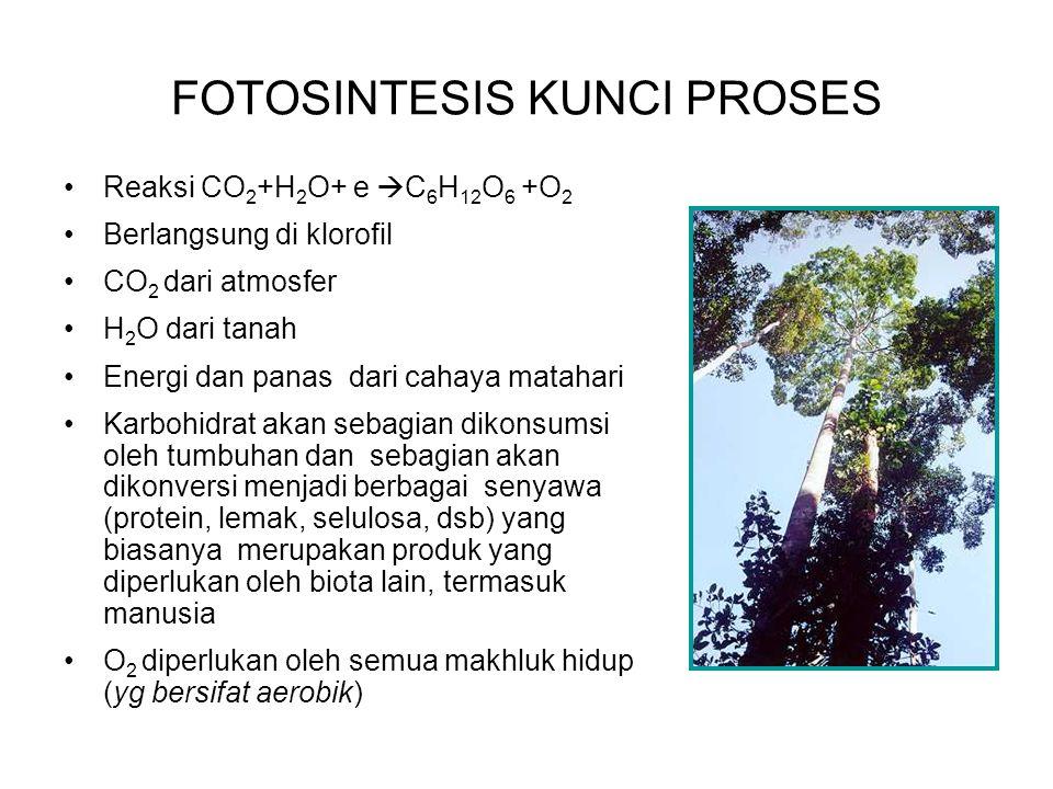 FOTOSINTESIS KUNCI PROSES