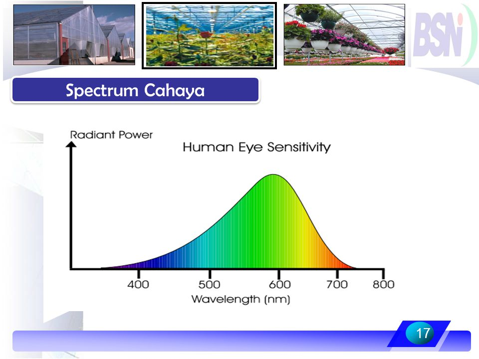 Spectrum Cahaya 17