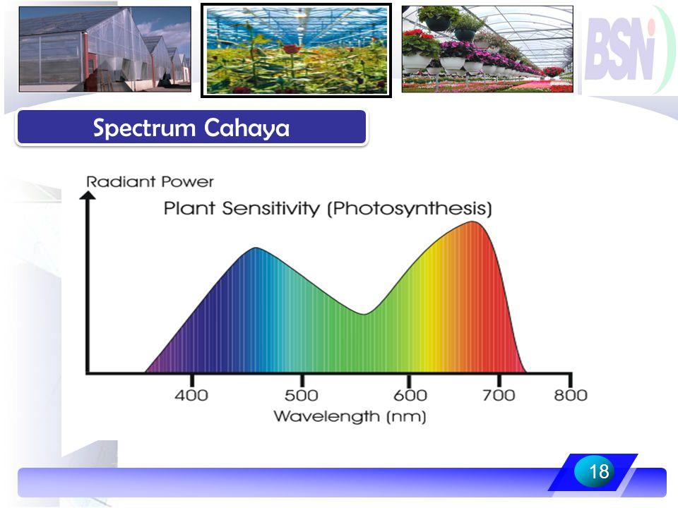 Spectrum Cahaya 18