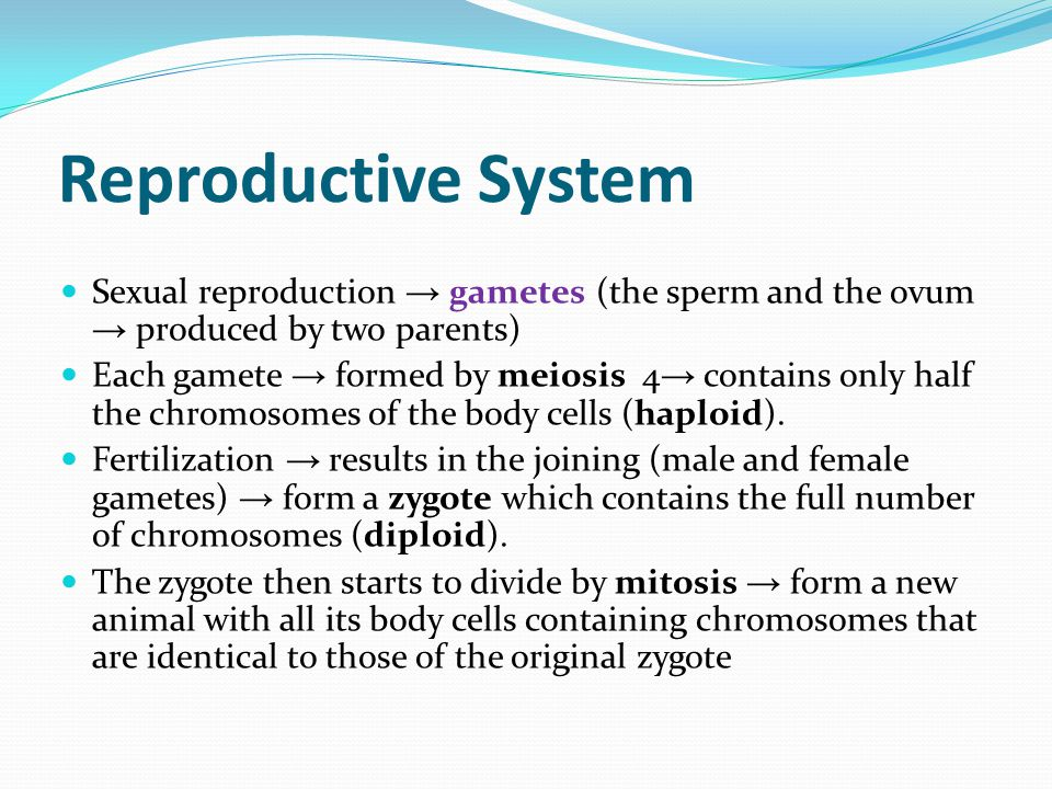 Reproductive System Sexual reproduction → gametes (the sperm and the ovum → produced by two parents)