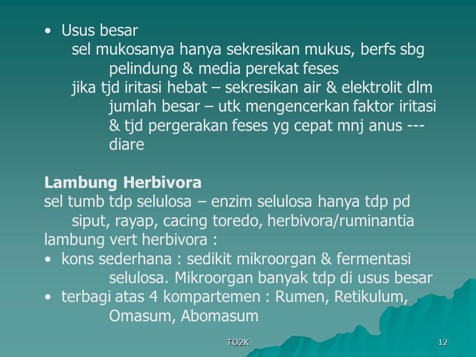 lambung vert herbivora :