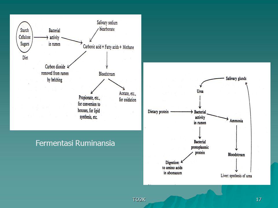 Fermentasi Ruminansia