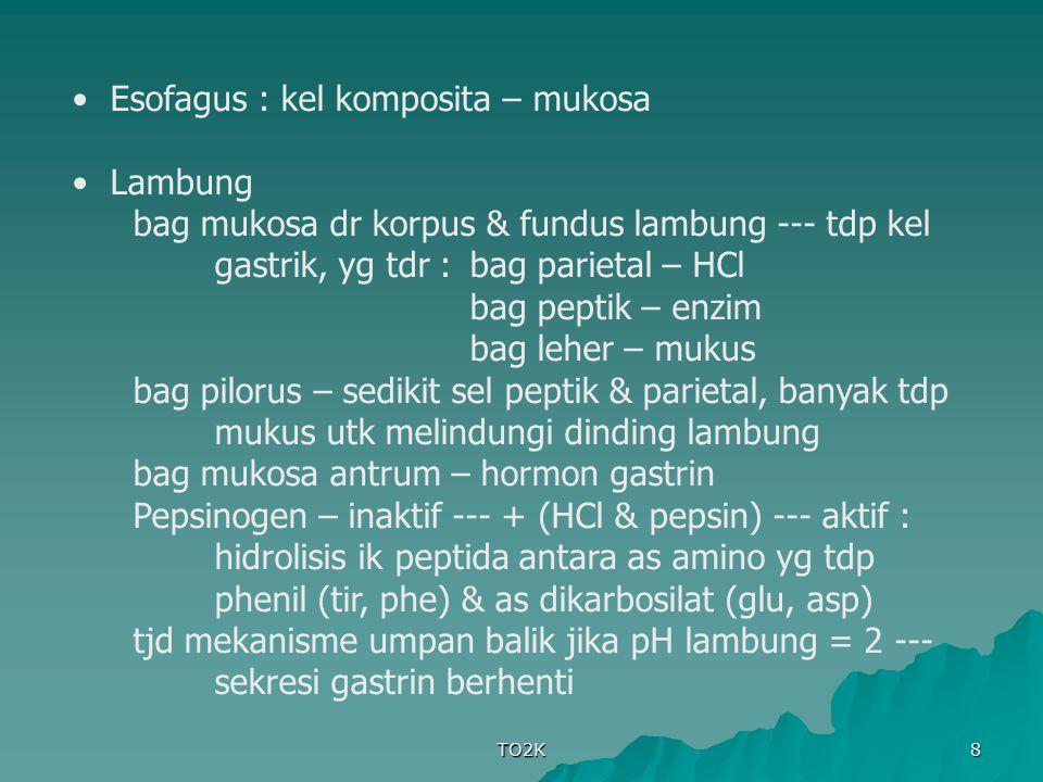 Esofagus : kel komposita – mukosa Lambung