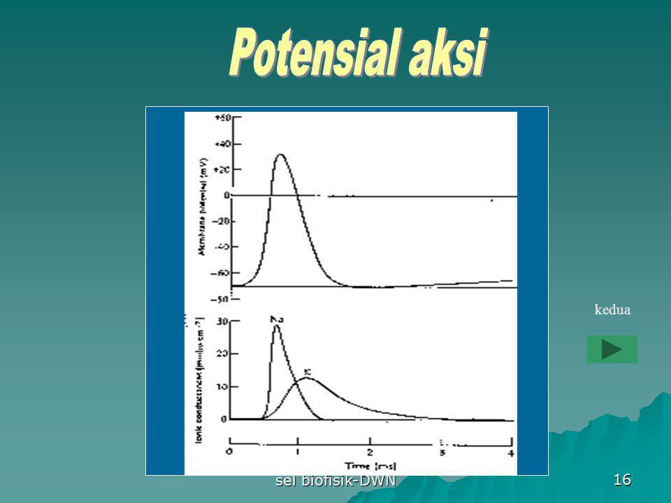 Potensial aksi kedua sel biofisik-DWN