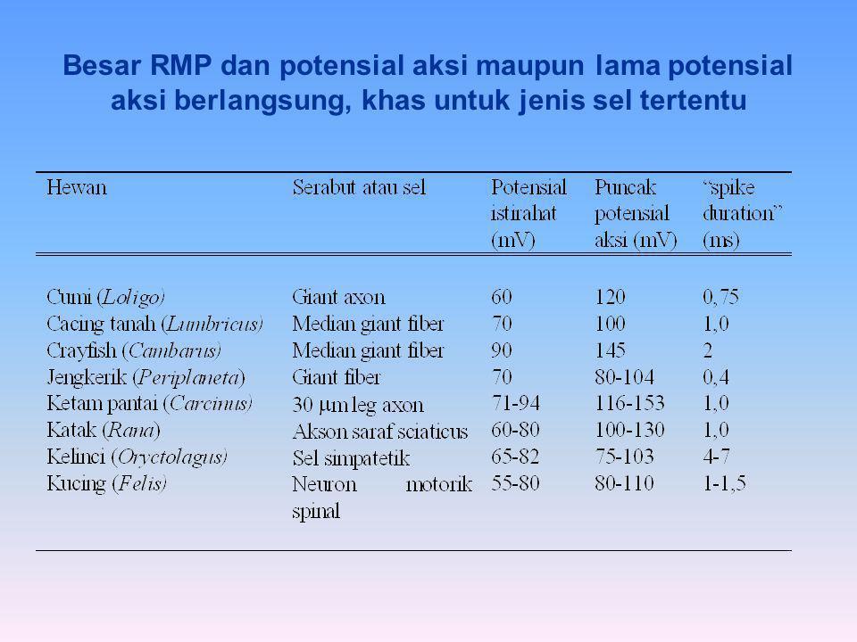 Besar RMP dan potensial aksi maupun lama potensial aksi berlangsung, khas untuk jenis sel tertentu