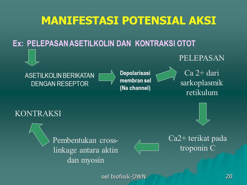 MANIFESTASI POTENSIAL AKSI