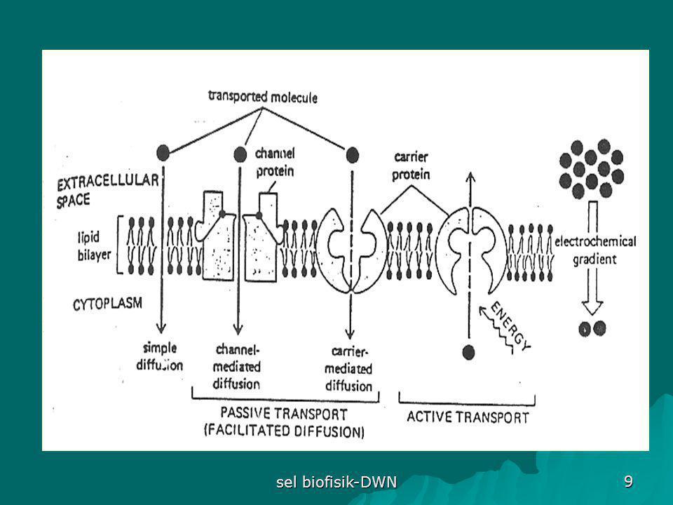 sel biofisik-DWN