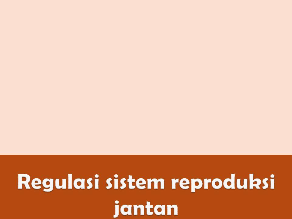 Regulasi sistem reproduksi jantan