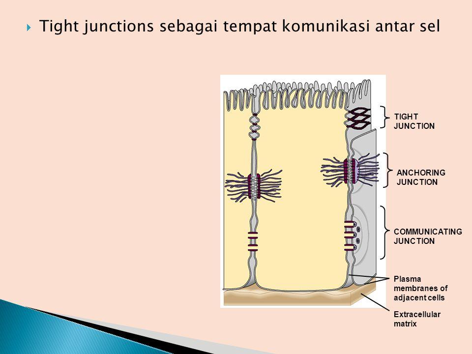 Tight junctions sebagai tempat komunikasi antar sel