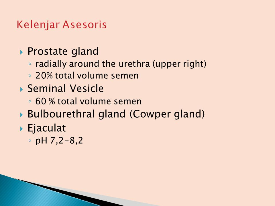 Kelenjar Asesoris Prostate gland Seminal Vesicle