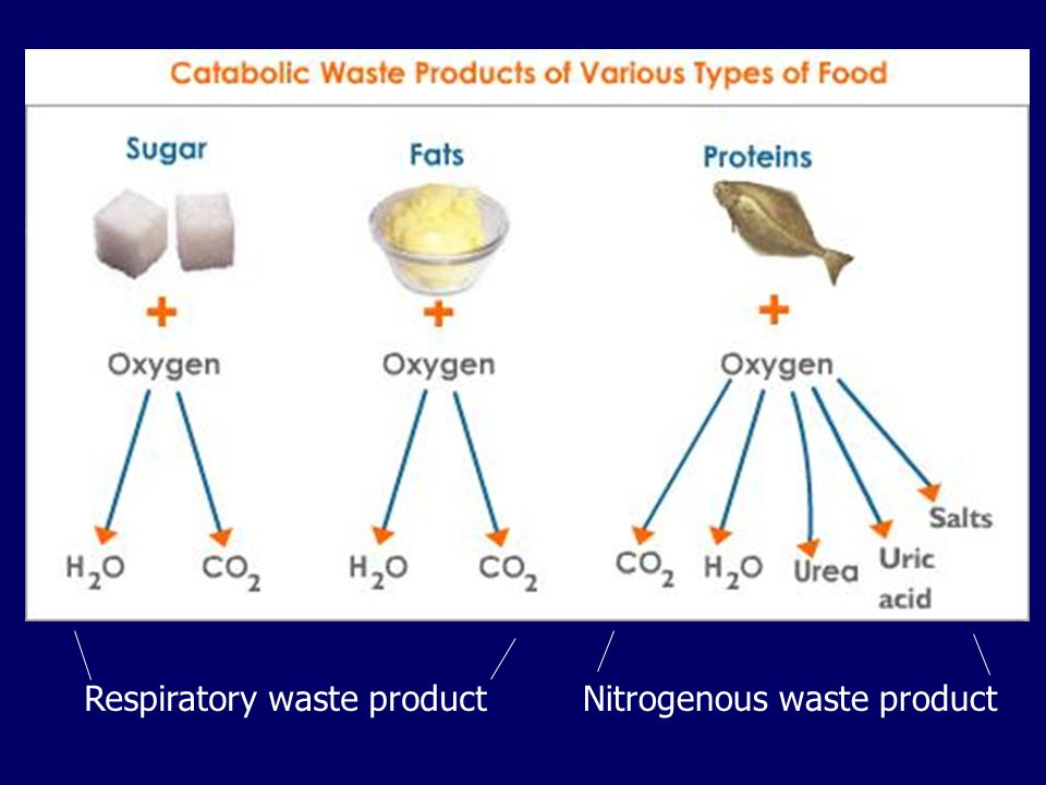 Respiratory waste product