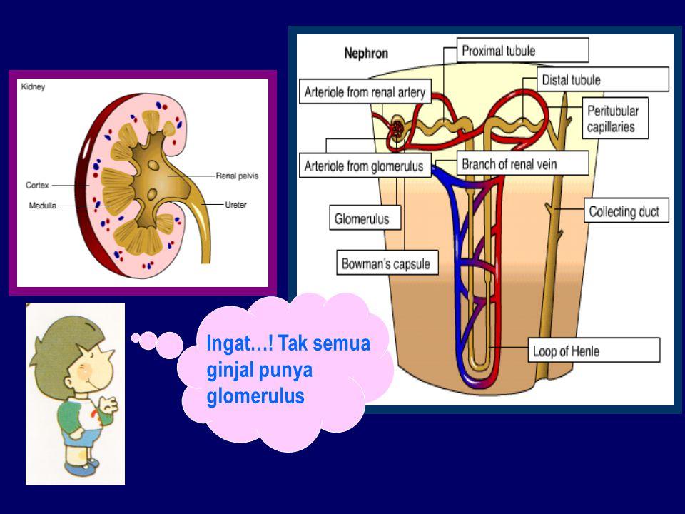 Ingat…! Tak semua ginjal punya glomerulus