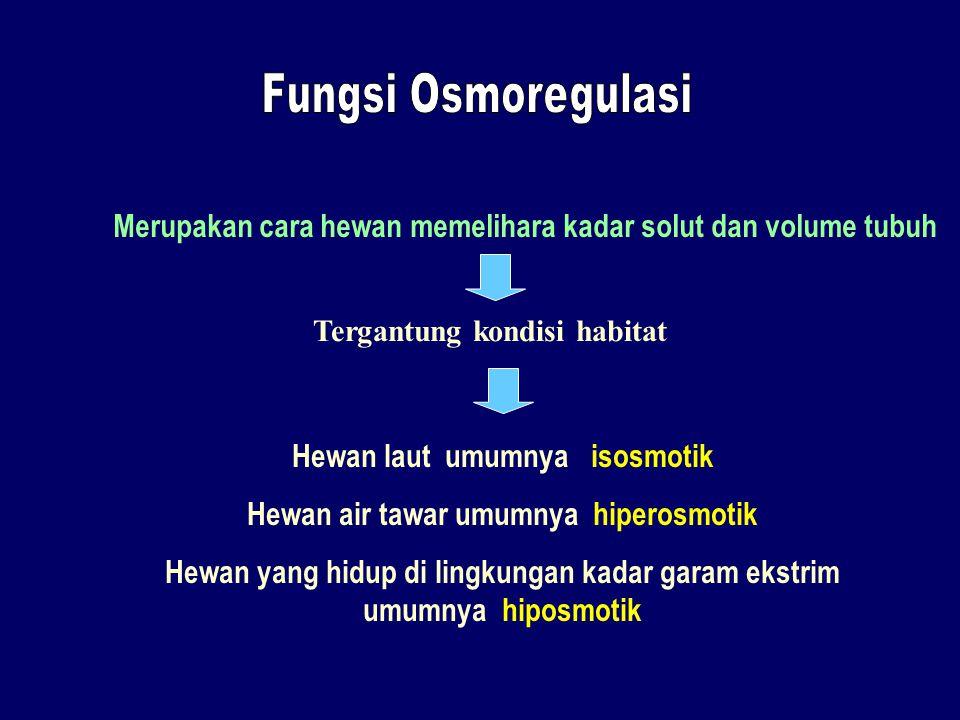 Fungsi Osmoregulasi Merupakan cara hewan memelihara kadar solut dan volume tubuh. Tergantung kondisi habitat.