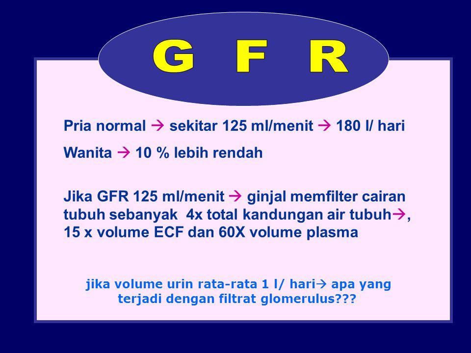 G F R Pria normal  sekitar 125 ml/menit  180 l/ hari