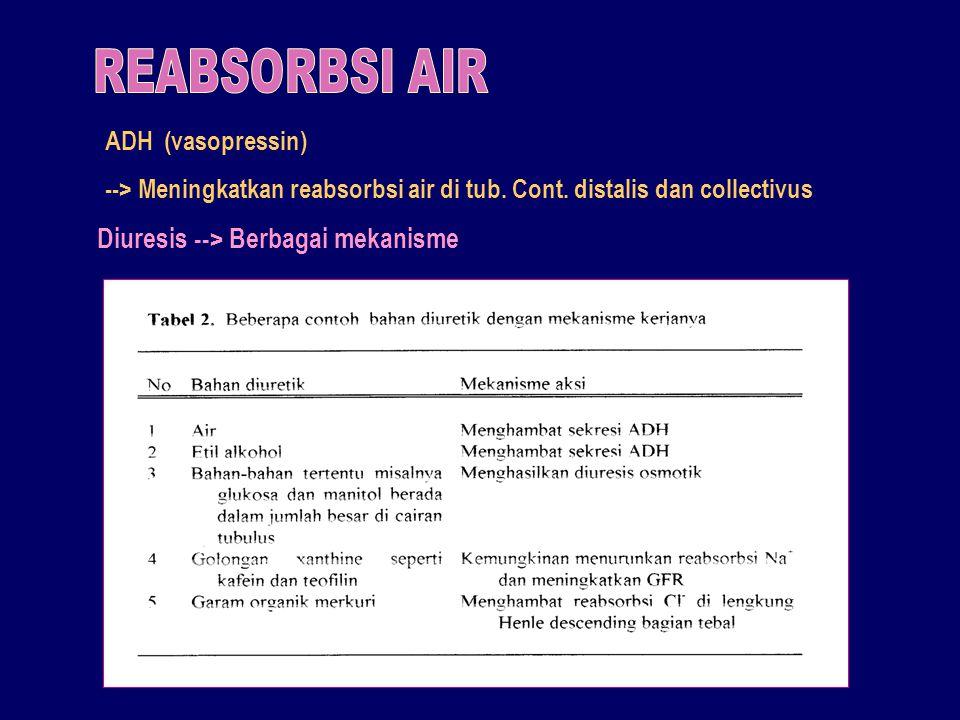 REABSORBSI AIR Diuresis --> Berbagai mekanisme ADH (vasopressin)