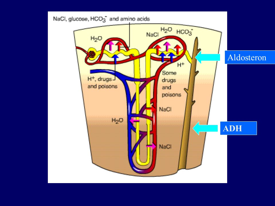 Aldosteron ADH