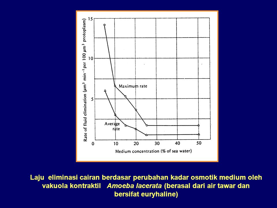 Laju eliminasi cairan berdasar perubahan kadar osmotik medium oleh vakuola kontraktil Amoeba lacerata (berasal dari air tawar dan bersifat euryhaline)
