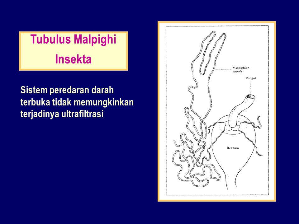 Tubulus Malpighi Insekta