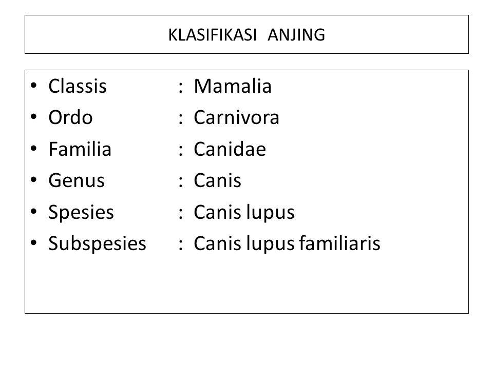 Subspesies : Canis lupus familiaris