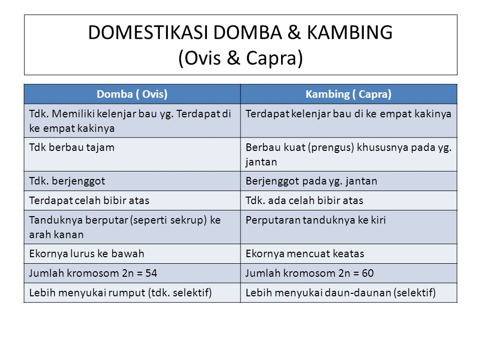 DOMESTIKASI DOMBA & KAMBING (Ovis & Capra)