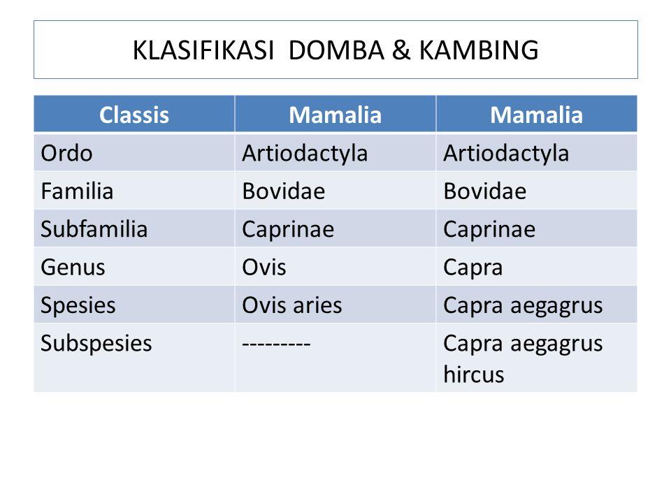 KLASIFIKASI DOMBA & KAMBING