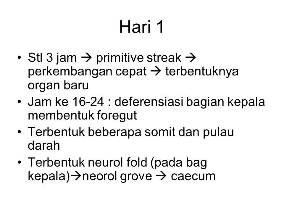 Hari 1 Stl 3 jam  primitive streak  perkembangan cepat  terbentuknya organ baru. Jam ke 16-24 : deferensiasi bagian kepala membentuk foregut.