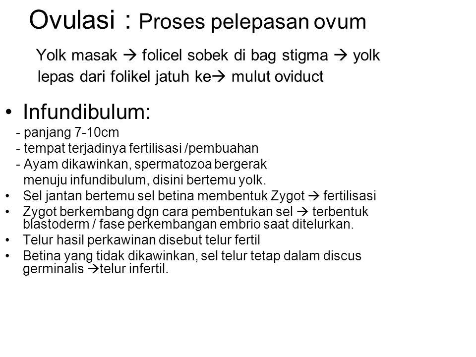 Ovulasi : Proses pelepasan ovum Yolk masak  folicel sobek di bag stigma  yolk lepas dari folikel jatuh ke mulut oviduct