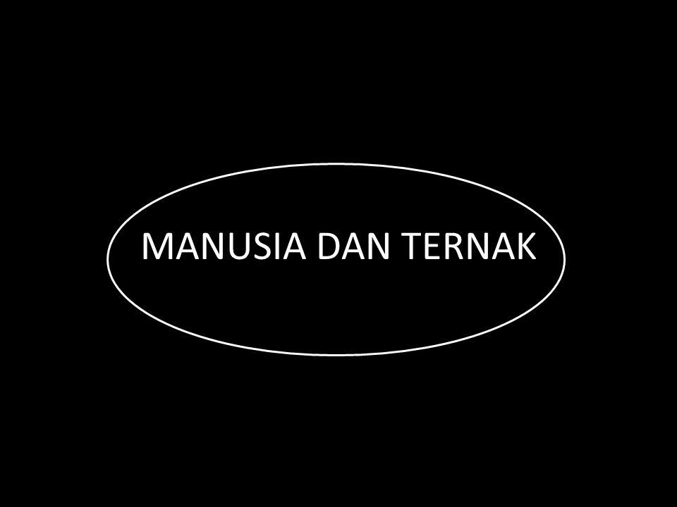 MANUSIA DAN TERNAK