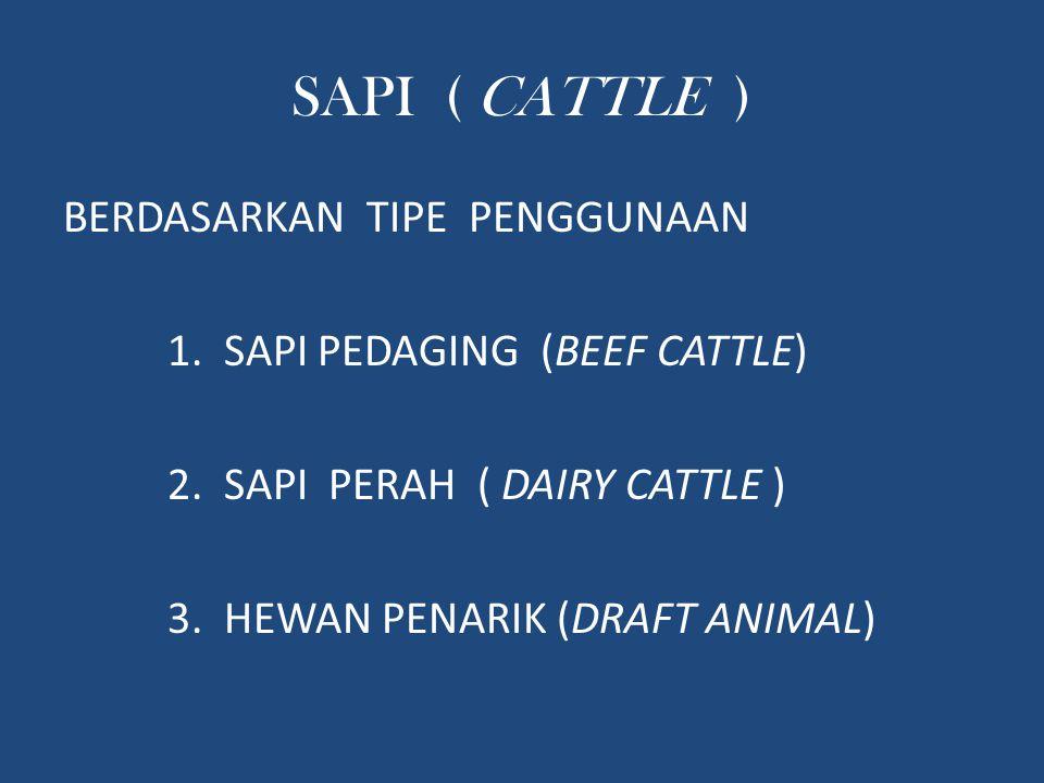 SAPI ( CATTLE ) BERDASARKAN TIPE PENGGUNAAN