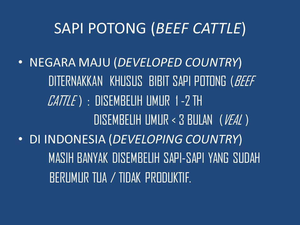 SAPI POTONG (BEEF CATTLE)