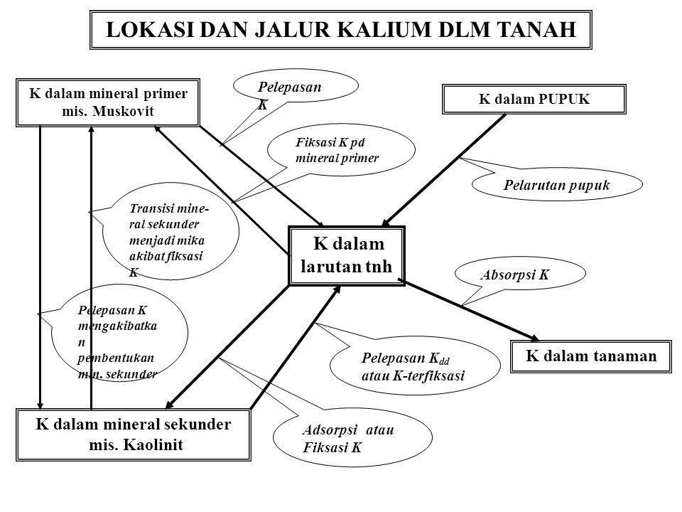 LOKASI DAN JALUR KALIUM DLM TANAH K dalam mineral sekunder