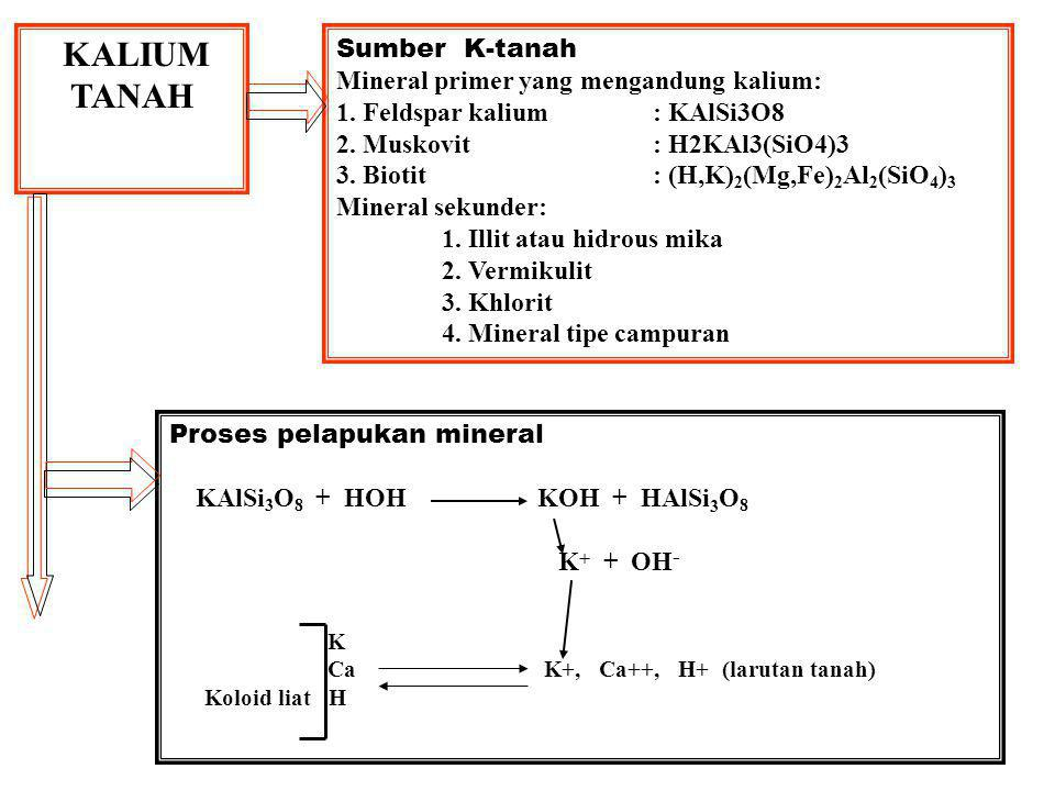 Ca K+, Ca++, H+ (larutan tanah) Koloid liat H