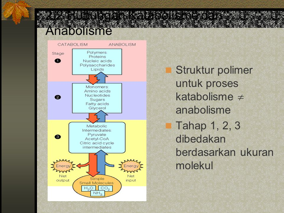 2.2 Hubungan Katabolisme dan Anabolisme
