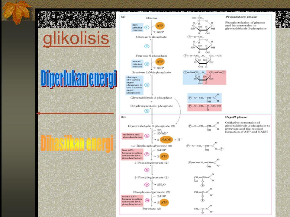 glikolisis Diperlukan energi Dihasilkan energi