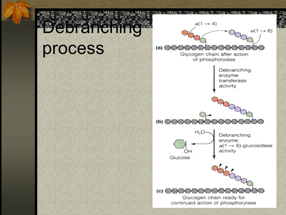 Debranching process